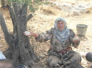 azmut old woman